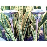 Stainless Steel Solar Path Lights (Set of 2)